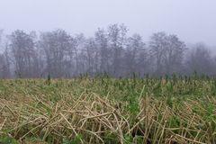 Nebel und Landschaft