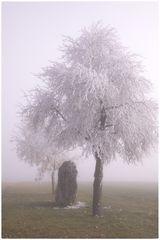 Nebel und Raueis auf der Alb 2