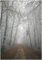 Nebel und Raueis auf der Alb