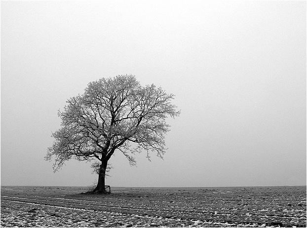 Nebel und Reif........und doch schön!