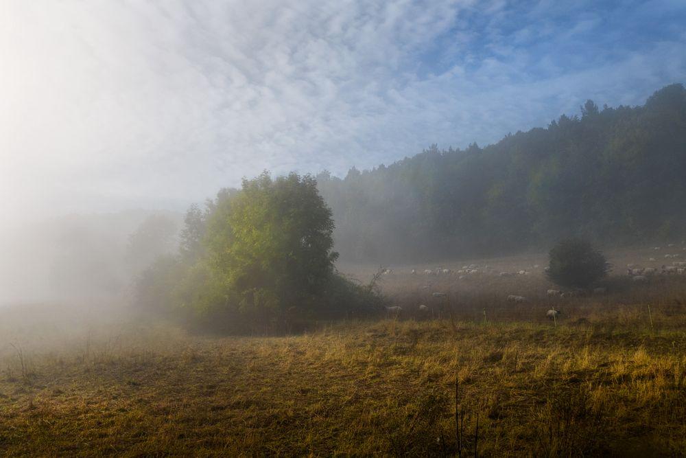 Nebel und Sonne am Morgen
