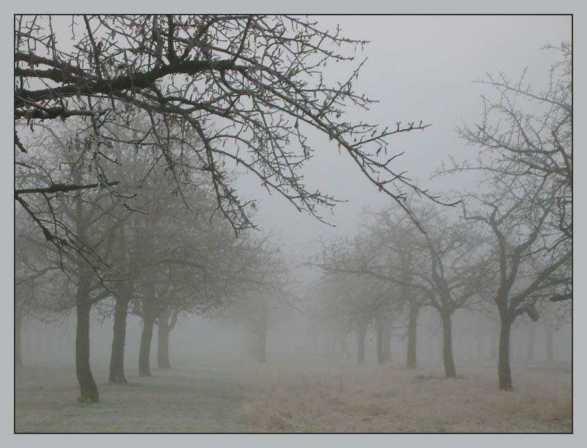 Nebel von Rechtenbach