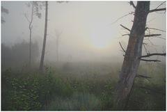 Nebel vor Sonne