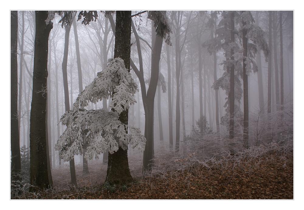 Nebel-Zauber-Wald