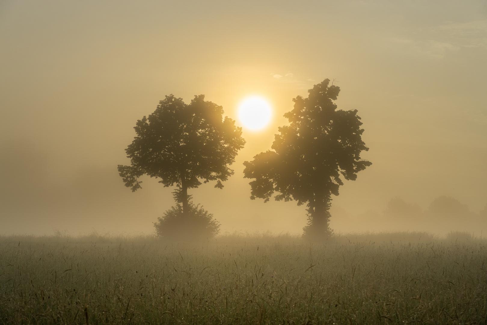 Nebel:Bäume