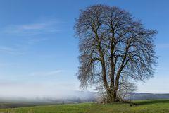 Nebel:Baum
