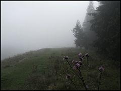 Nebelbild 1