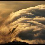 Nebelfall im Abendlicht