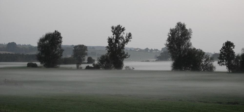 Nebelfeld