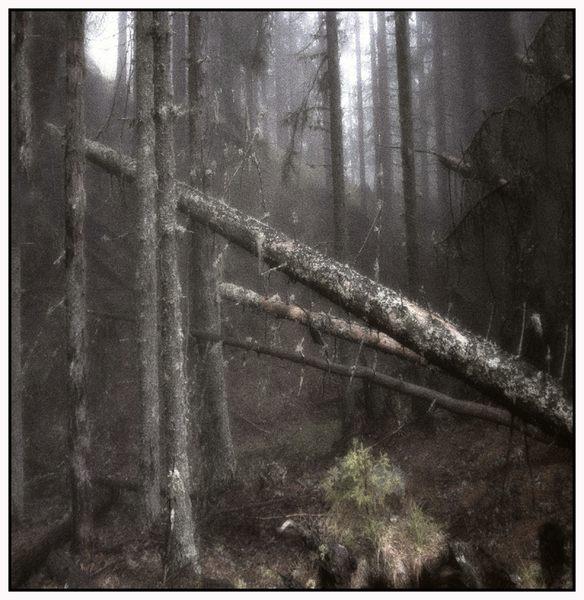 Nebelgarten 1