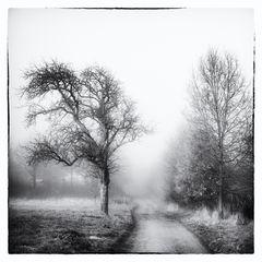 Nebelgeschichten 10