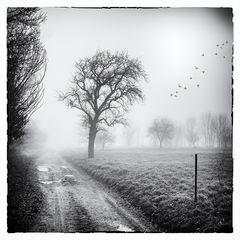 Nebelgeschichten 3