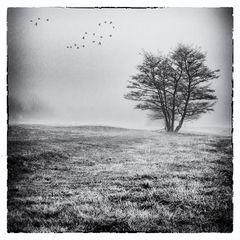 Nebelgeschichten 4