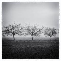 Nebelgeschichten 5