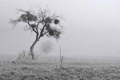 Nebelgeschichten