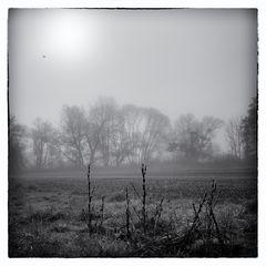 Nebelgeschichten 6