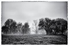 Nebelgeschichten 7