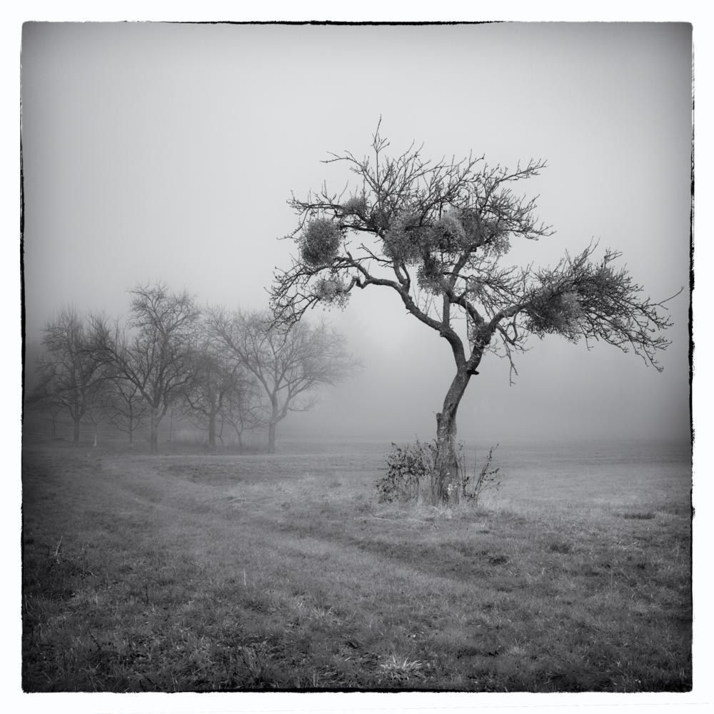 Nebelgeschichten 8