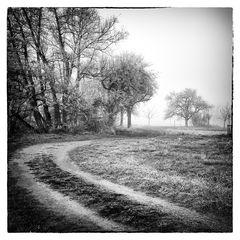 Nebelgeschichten 9