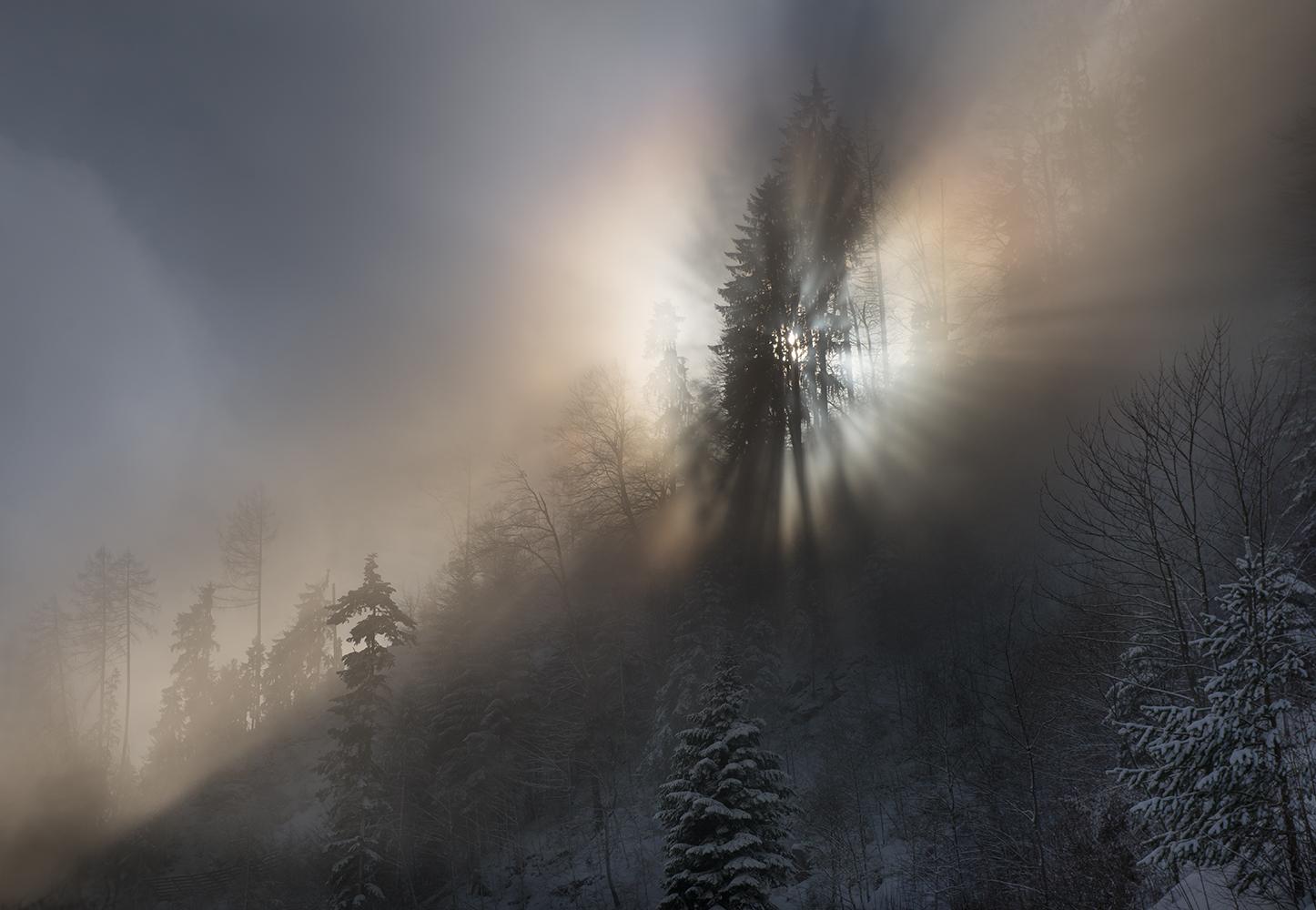 Nebelgrenze im Bergwald...