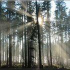 Nebelgrenze_1