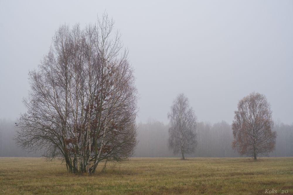 Nebelheide