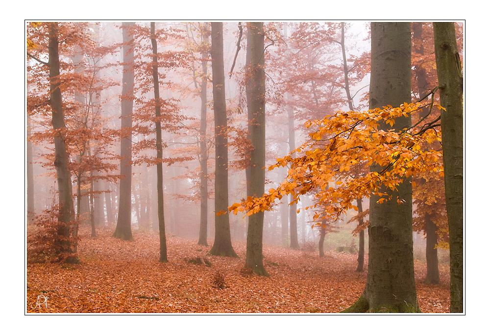 Nebelherbstwald
