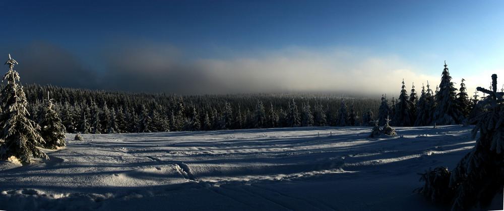 nebeliger Wintertag 2006; Sonne suchen II