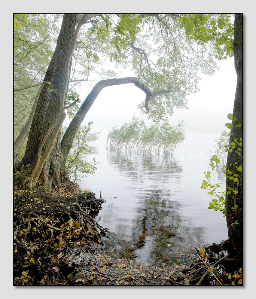 Nebelmorgen am See