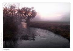 Nebelmorgen......