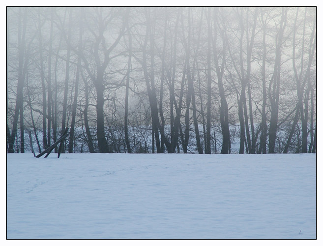 Nebelmorgen II