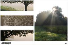 Nebelmorgen in feuchtem Gras