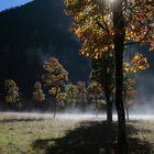 Nebelschwaden am Ahornboden