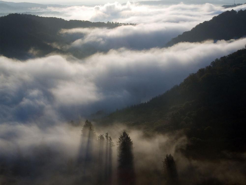 Nebelschwaden an der Saarschleife