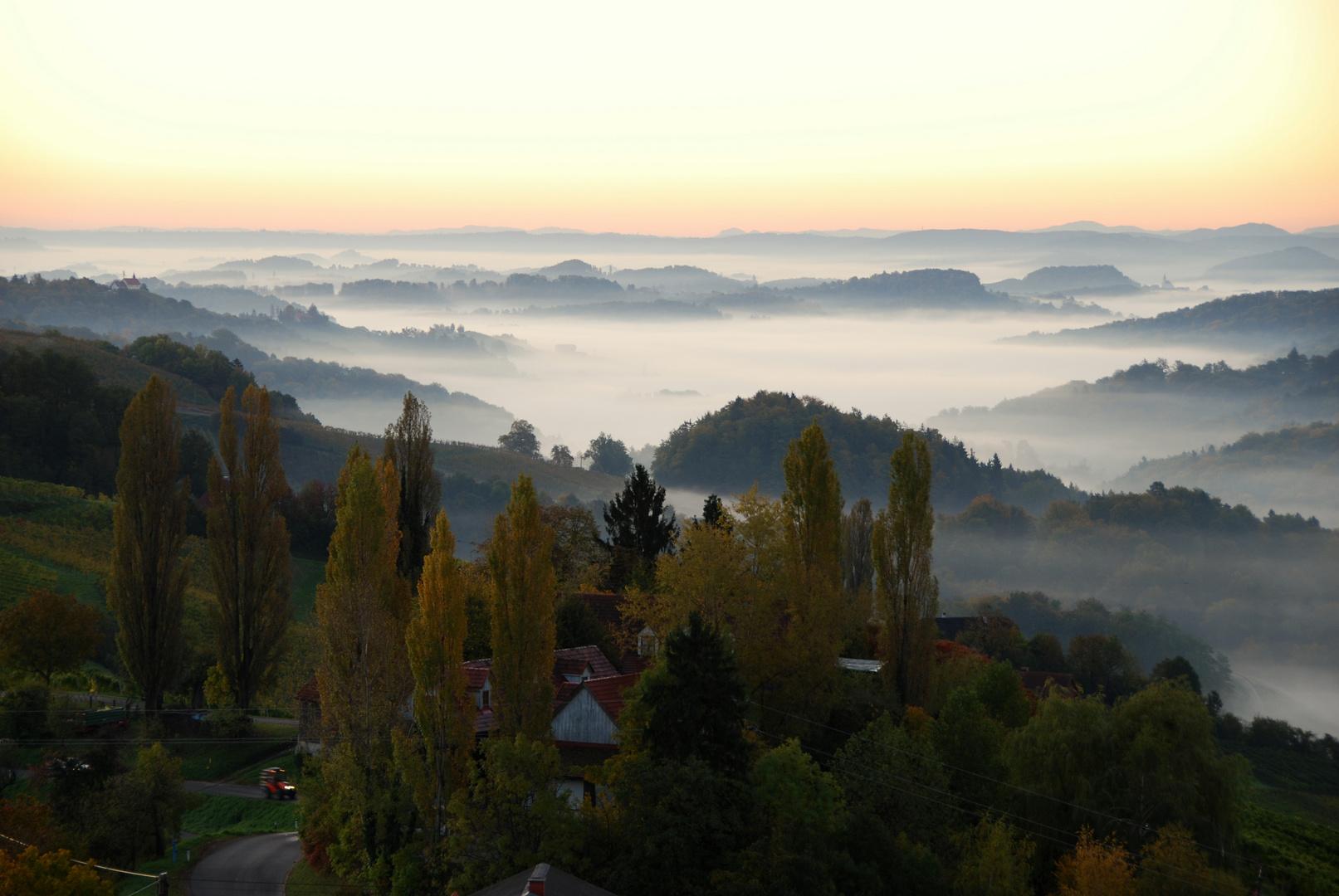 Nebelschwaden an der Weinstraße