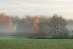 Nebelschwaden im Rußdorffer Holz