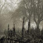 Nebelschwadenbilder I