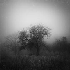 Nebelschwere