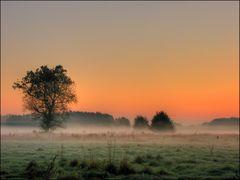 Nebelslandschaft am Morgen