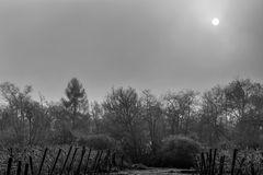 Nebelsonne