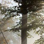 Nebelsonnenstrahlen