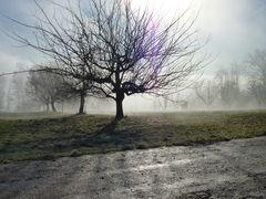 Nebelspaziergang 3