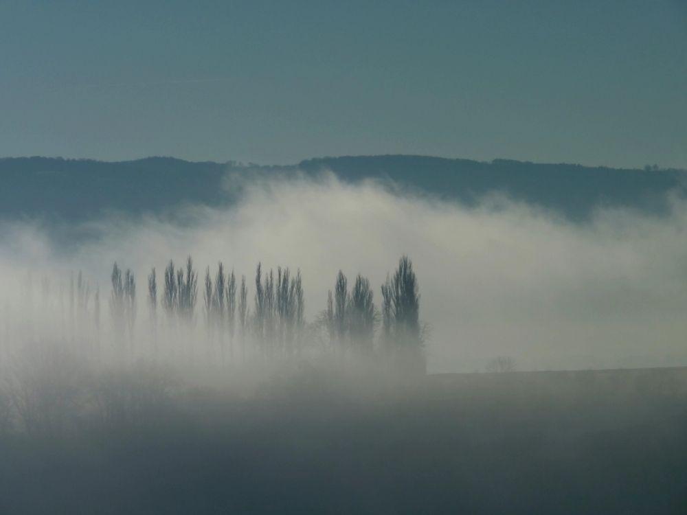 Nebelspaziergang 4