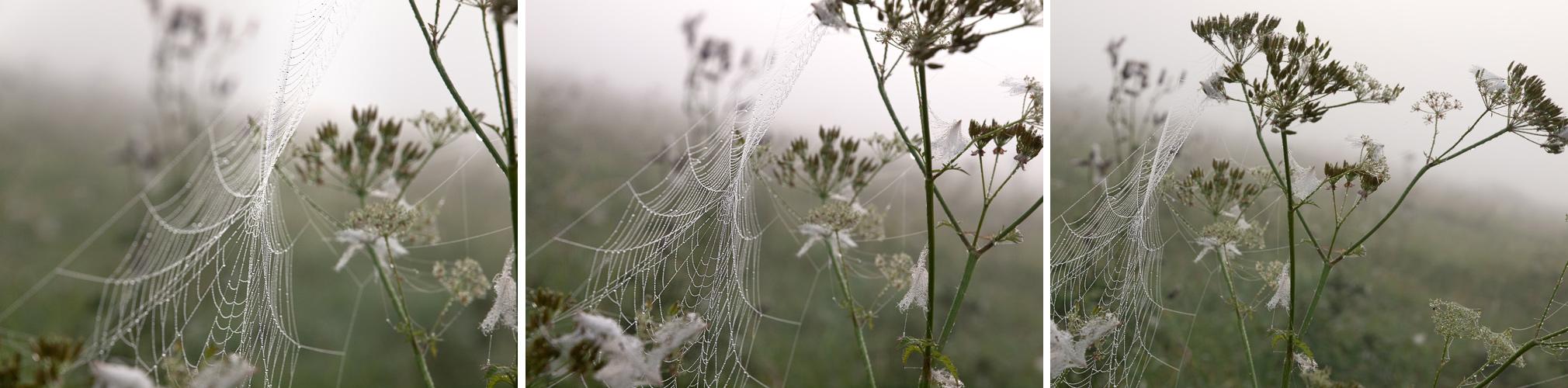 Nebelspinnenvariationen