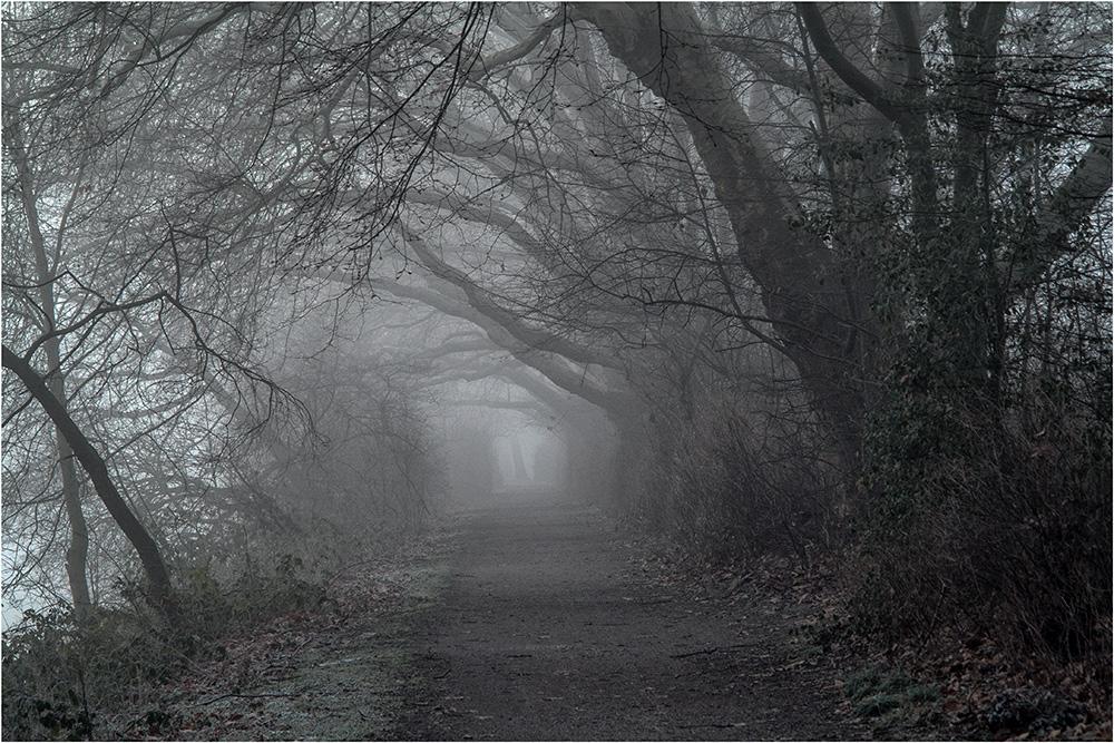 Nebelstimmung am Blauen See