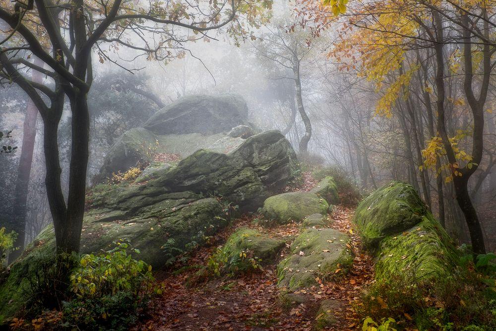 Nebelstimmung am Hermannsweg
