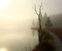 Nebelstimmung am Königssee