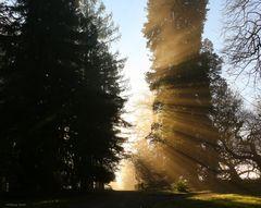 Nebelstimmung auf der Insel Mainau I