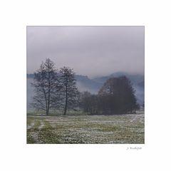 Nebelstimmung im Spätherbst