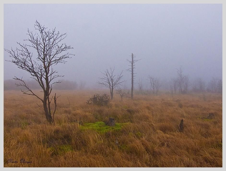 Nebelstimmung im Venn